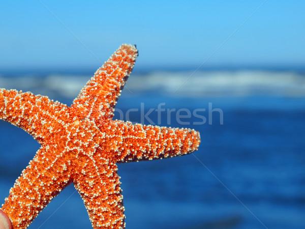 Starfish bord océan vagues poissons nature Photo stock © Frankljr