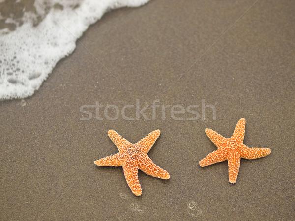Iki denizyıldızı balık deniz arka plan yaz Stok fotoğraf © Frankljr