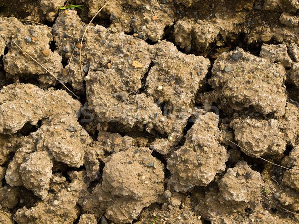 Repedt száraz föld tele napfény nyár Stock fotó © Frankljr
