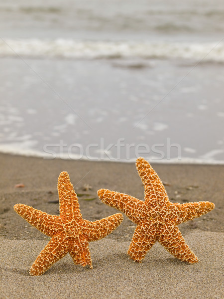 Dois starfish peixe mar fundo verão Foto stock © Frankljr