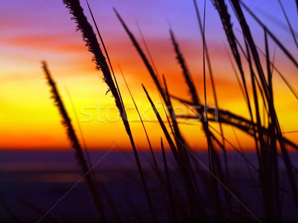 Stok fotoğraf: Altın · gün · batımı · plaj · çim · rüzgâr