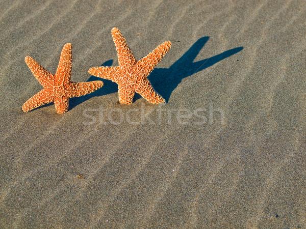 Deux starfish plage sable poissons soleil Photo stock © Frankljr