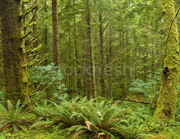 зеленый леса мох пышный растений парка Сток-фото © Frankljr