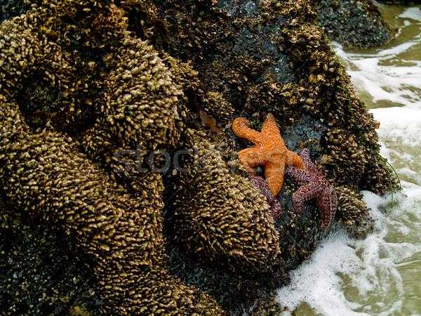 Starfish attaché roches surf plage eau Photo stock © Frankljr