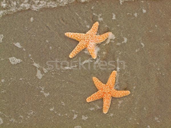 Two Starfish  Stock photo © Frankljr