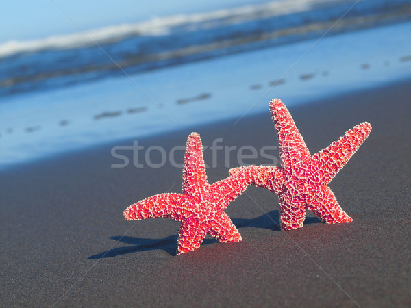 Stock photo: Two Red Starfish with Shadows on the Beach with Ocean Waves in the Background