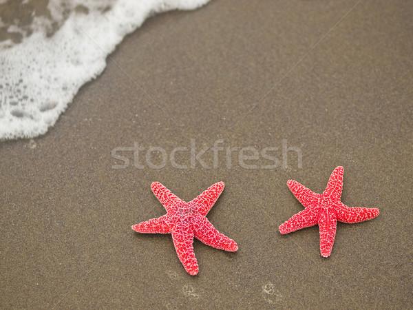 Due rosso starfish pesce mare sfondo Foto d'archivio © Frankljr
