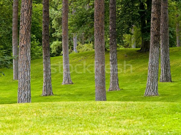 травянистый парка деревья холмы дерево небе Сток-фото © Frankljr