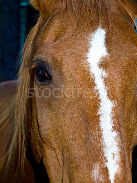Pferd Porträt Scharfeinstellung braun Auge Wolken Stock foto © Frankljr