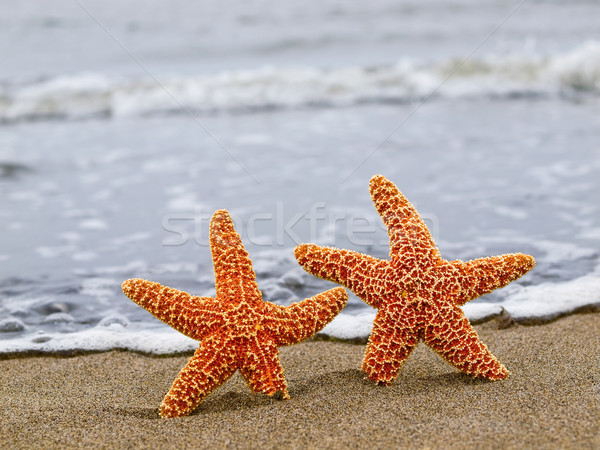 Stock photo: Two Orange Starfish on the Shoreline with Blue Waves in the Back