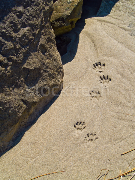 Stock photo: Paw Prints in the Sand