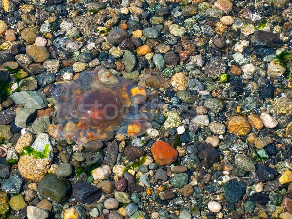 Meduza hullámok kavics tengerpart természet tenger Stock fotó © Frankljr