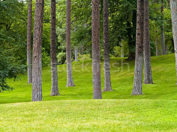 Grassy Park and Trees Stock photo © Frankljr