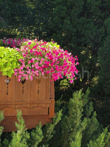 Stockfoto: Mooie · paars · violet · balkon · tuin · hout