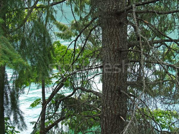Bomen meer achter bos vijver Stockfoto © Frankljr