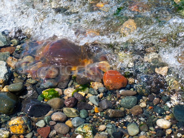 Jellyfish Tossed by Waves Stock photo © Frankljr