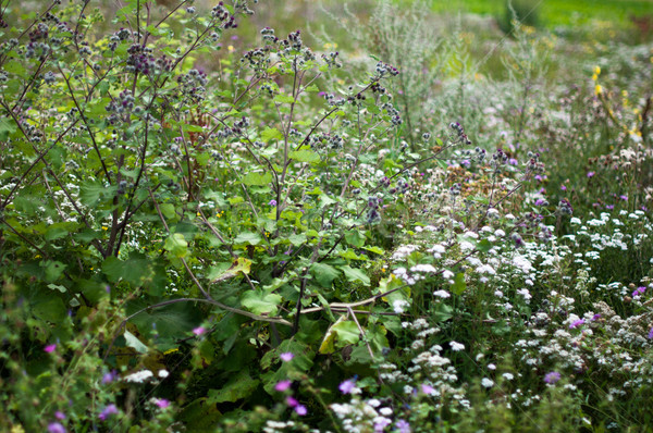 Campo flores silvestres vibrante céu grama Foto stock © franky242