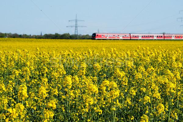 Canola field and train Stock photo © franky242