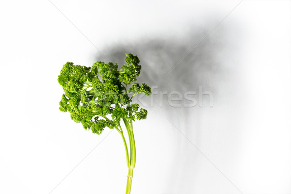 abstract: parsley Stock photo © franky242