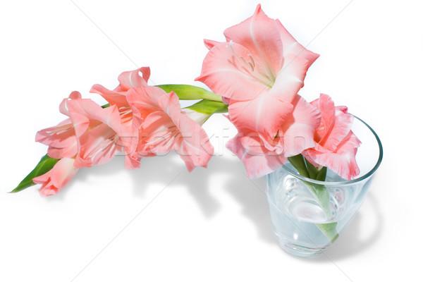 Rosa isolado branco vidro vaso água Foto stock © franky242