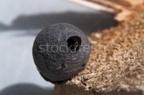 Vespa ninho pequeno papel madeira casa Foto stock © franky242