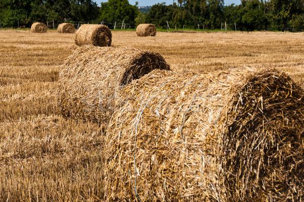 Foin champs été chaumes domaine Photo stock © franky242