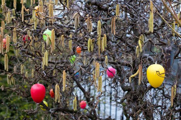 Photo stock: Pâques · arbre · coloré · œufs · de · Pâques · décoré · floraison
