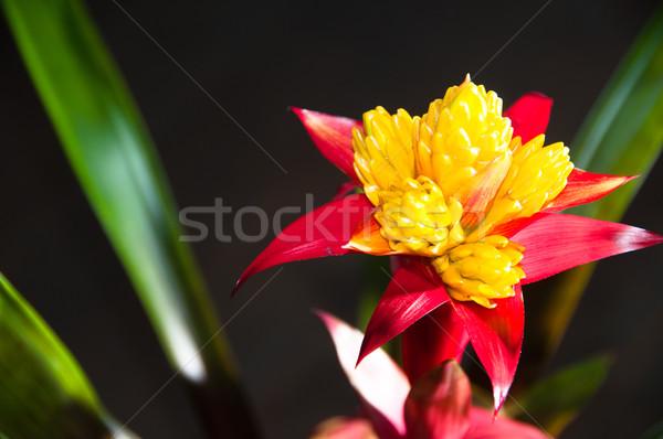 Photo stock: Floraison · usine · sombre · nature · feuille · vert