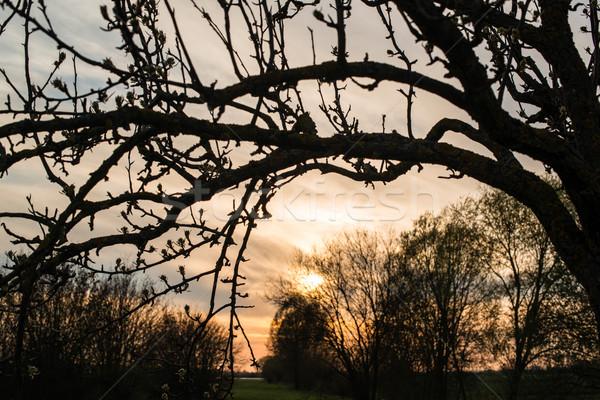 春 日没 劇的な 美しい 表示 自然 ストックフォト © franky242