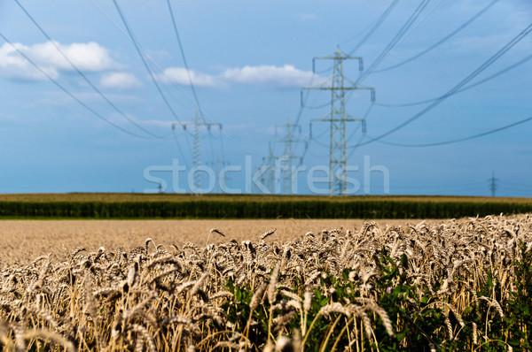 Photo stock: Champs · pouvoir · maïs · foin · herbe · construction