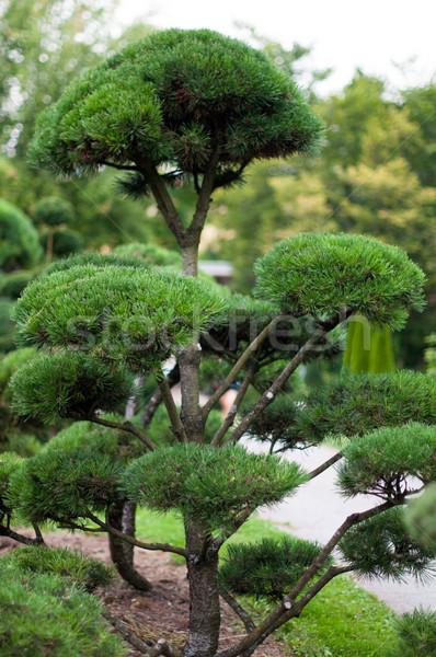 Jardin paysage arbres fleurs arbre Photo stock © franky242