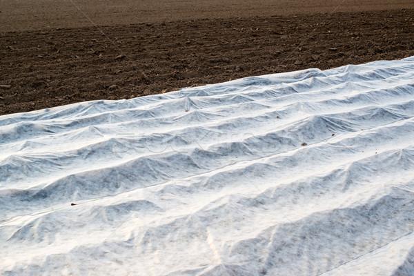 Foto d'archivio: Campo · serra · crescita · verdura · coperto · plastica