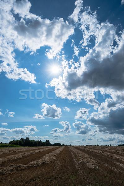 Photo stock: Nuageux · ciel · or · domaine · récolte · fin