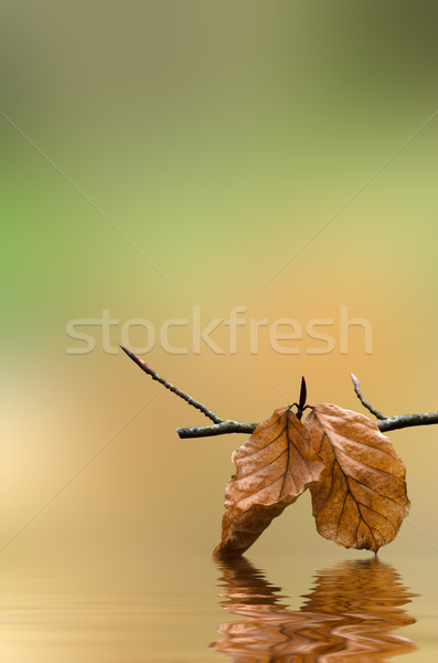 Branch of Autumn Leaves over Water Stock photo © frannyanne