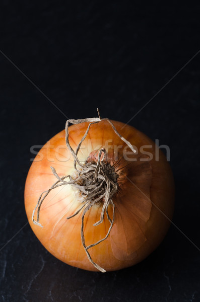 Single Onion From Above on Black Slate Stock photo © frannyanne