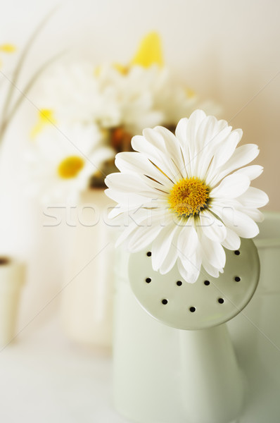 Chrysanthemum Flower in Watering Can with Florall Display and Ho Stock photo © frannyanne