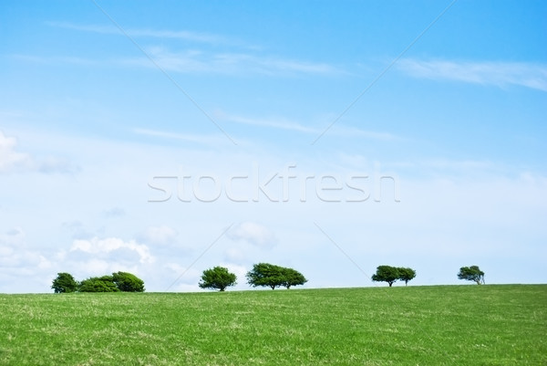 Grass Trees and Sky Landscape Stock photo © frannyanne