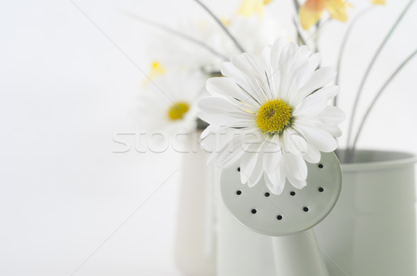 Spring Flower in Watering Can Stock photo © frannyanne