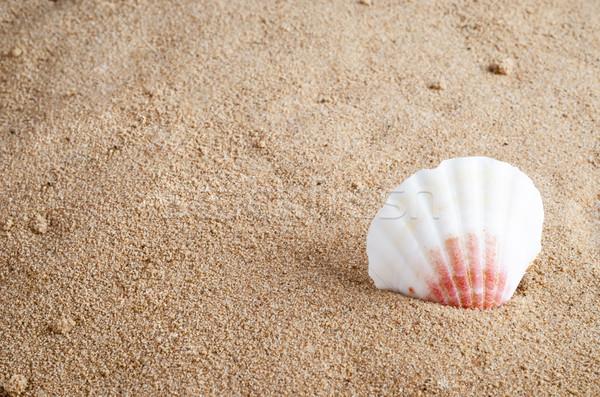 Złoty plaża piaszczysta biały różowy piasek na plaży Zdjęcia stock © frannyanne