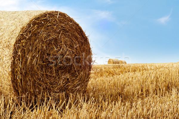 Arany szalmaszál késő nyár mezőgazdasági tájkép Stock fotó © frannyanne