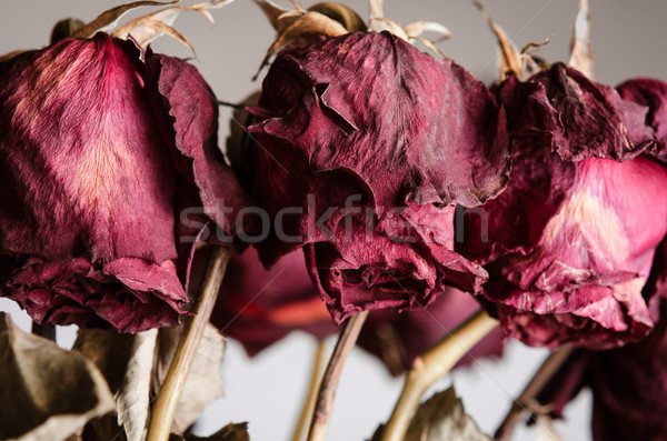 Dying Rose Bouquet Close Up Stock photo © frannyanne
