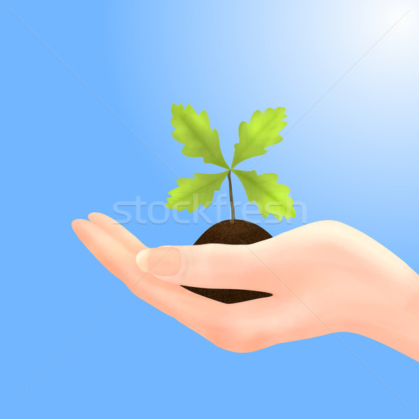 Oak Sapling in Hand with Blue Sky Stock photo © frannyanne