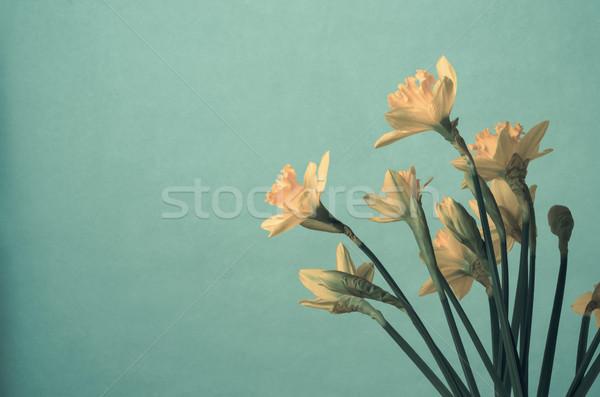 Sarı bahar nergis turkuaz su Stok fotoğraf © frannyanne