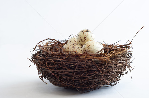 Bird Nest with Speckled Eggs Stock photo © frannyanne