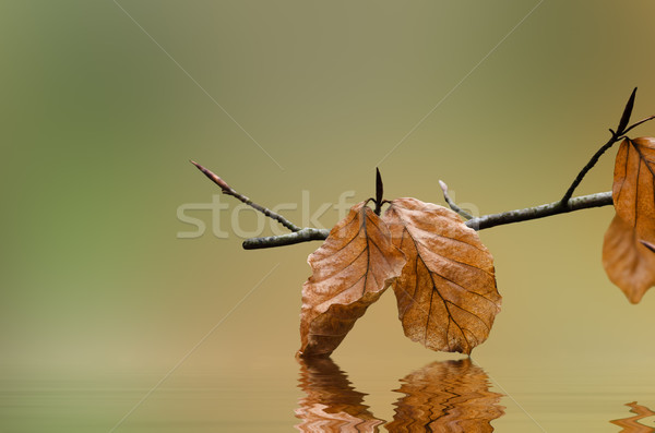 Autumn Leaves Touching Water Stock photo © frannyanne