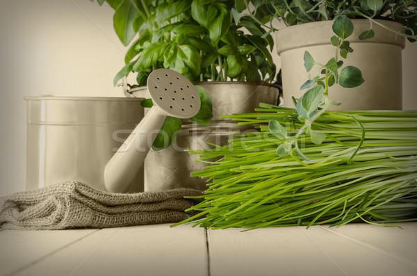 Zöld konyha gyógynövények szépia otthon megnőtt Stock fotó © frannyanne
