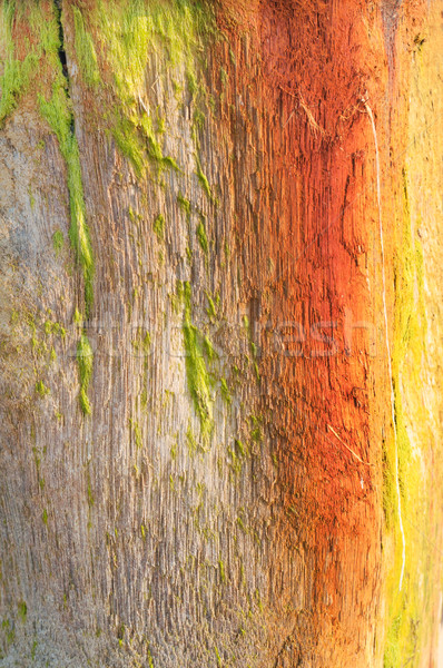 Weathered Wood Beach Post Background Texture Stock photo © frannyanne