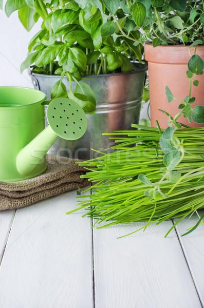 Potted Kitchen Herb Scene Stock photo © frannyanne