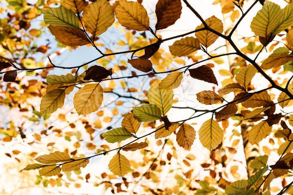 Drzewo poniżej jesienią okap Zdjęcia stock © frannyanne