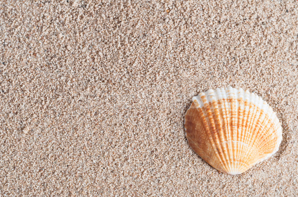 Seashell on Sand Stock photo © frannyanne